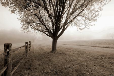 Фото дерево, забор, дорога, туман