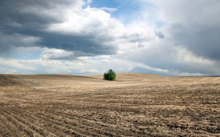 Картинки поле, небо, куст, пейзаж