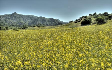 Заставки поле, цветы, пейзаж
