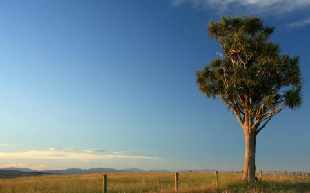 Заставки трава, забор, столбы, дерево