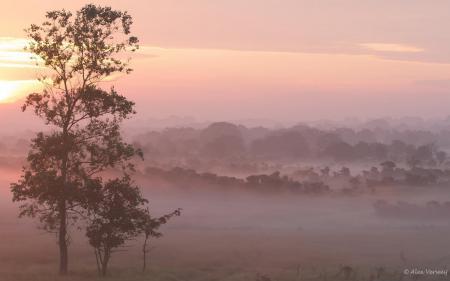 Картинки утро, поле, дерево, туман
