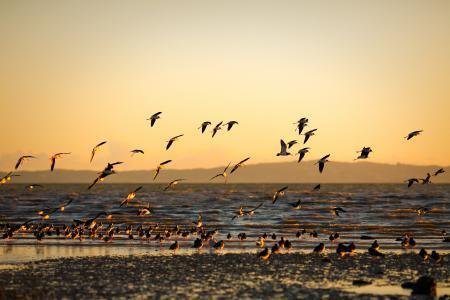 Обои морской, берег, море, птицы