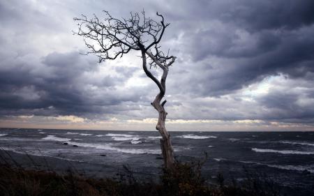 Фото море, дерево, ночь, пейзаж