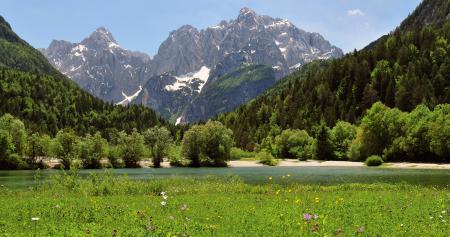 Заставки горы, луг, цветы, деревья