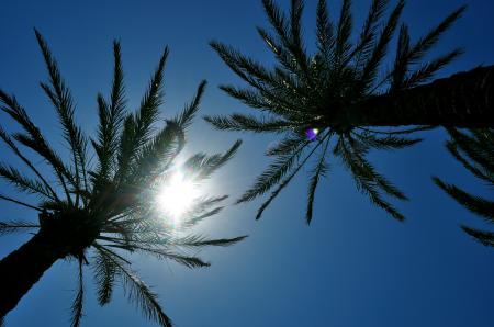 Фото пальмы, небо, солнце, отдых