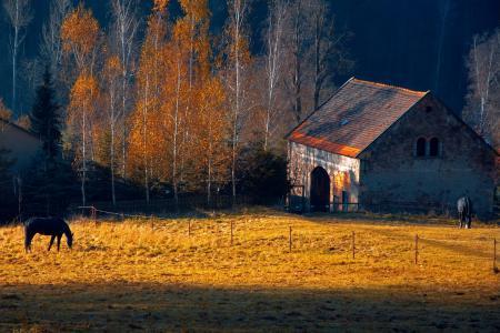 Картинки утро, кони, дом