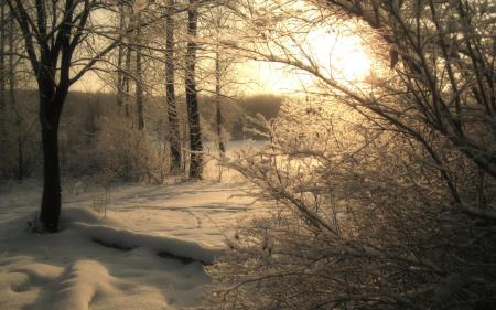Обои лес, зима, природа, пейзаж