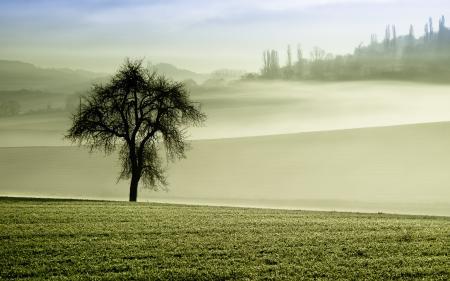 Фото поле, дерево, туман