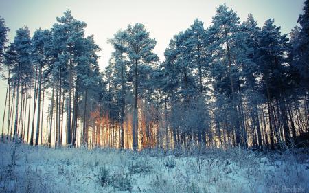 Фотографии зима, деревья, снег, природа
