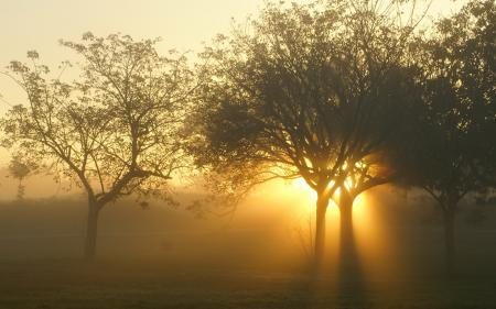 Заставки закат, деревья, свет, пейзаж