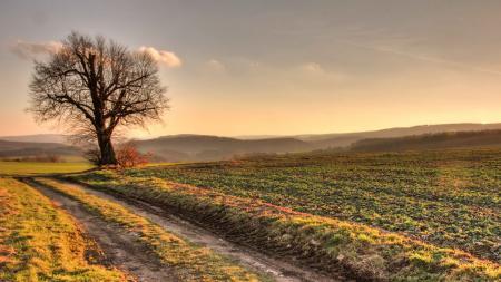 Картинки природа, пейзаж, дерево