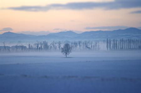 Фотографии пейзажи, природа, дерево