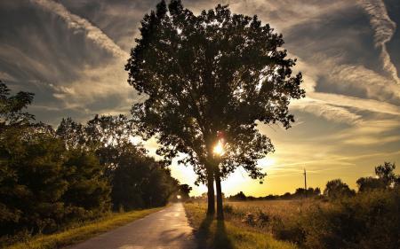 Обои закат, дорога, дерево, пейзаж