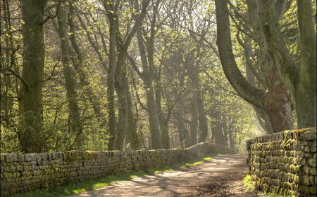 Картинки дорога, забор, деревья