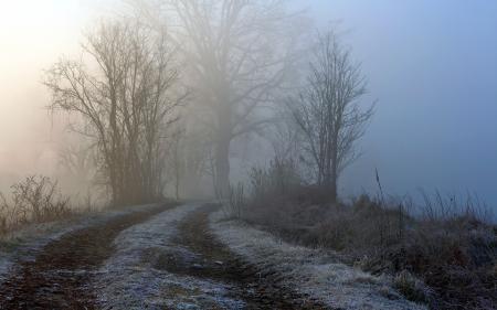 Фотографии дорога, туман, деревья