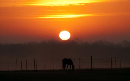 Картинки закат, конь, пейзаж