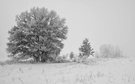 Фото зима, поле, снег, природа