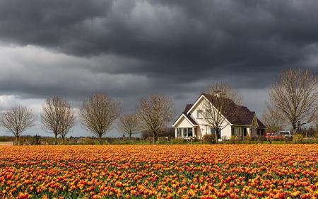 Фотографии тюльпаны, дом, небо, пейзаж