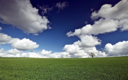 Фото поле, дерево, небо, пейзаж