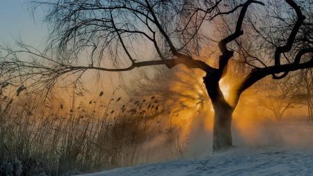 Обои солнце, туман, утро, дерево