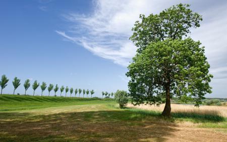 Картинки поле, деревья, лето
