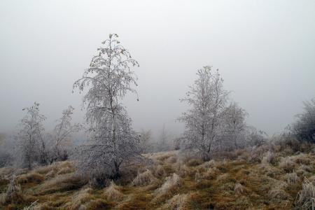 Фото деревья, иней, туман, природа