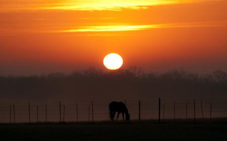Обои закат, конь, пейзаж