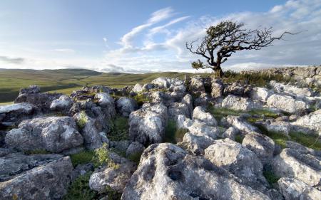 Фотографии поле, дерево, камни, природа