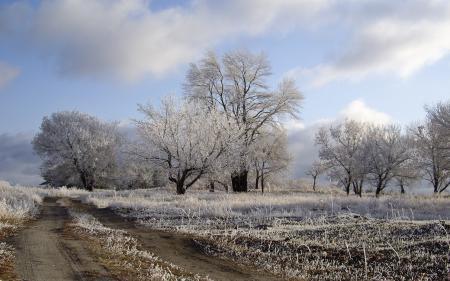 Фото зима, поле, дорога, деревья
