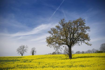 Обои поле, поляна, цветы, желтые