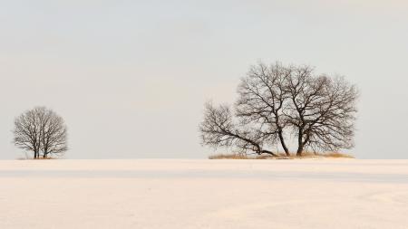 Картинки зима, поле, деревья, снег