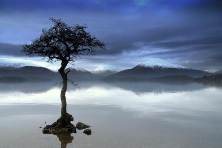 Картинки горы, река, дерево, отражение