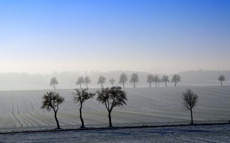 Фото поле, деревья, пейзаж