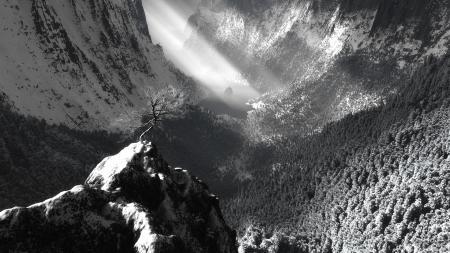 Фотографии пейзаж, гора, дерево, свет