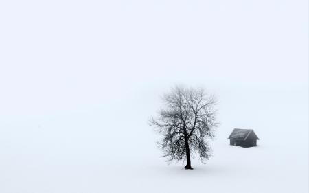 Картинки дом, дерево, туман, пейзаж