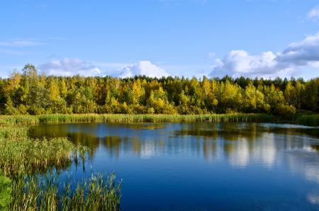 Заставки Озеро, отражение в воде, лес, водоём