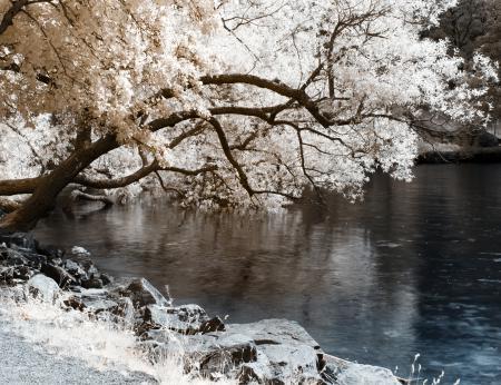 Картинки дерево, река, цветение, камни