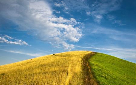 Фото холм, лето против осени, трава, зелень