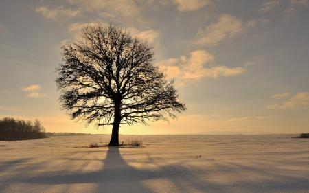 Обои зима, поле, дерево, снег
