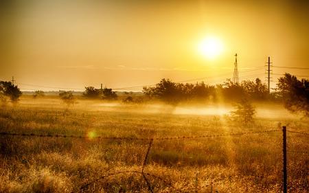 Обои поле, трава, деревья, солнце