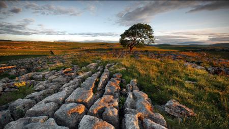 Картинки поле, камни, дерево, закат