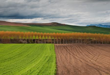 Заставки поля, осень, деревья, небо