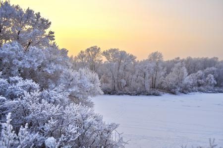 Фото природа, деревья, снег, зима