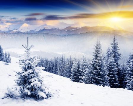 Фото ёлка, снег, сопки, лес