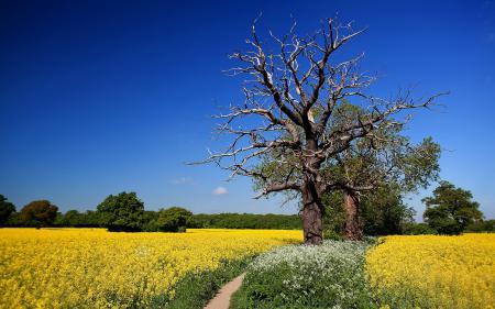 Фотографии дерево, поле, лето, пейзаж