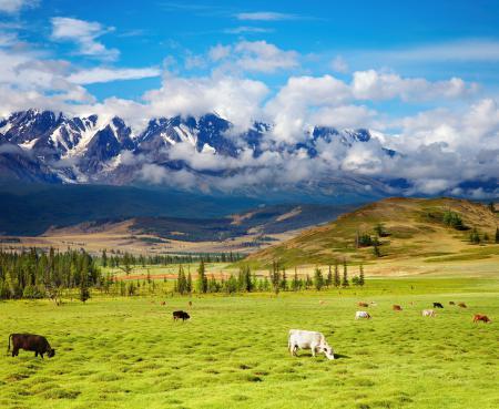 Фотографии Highlands, green valley, cattle, горы