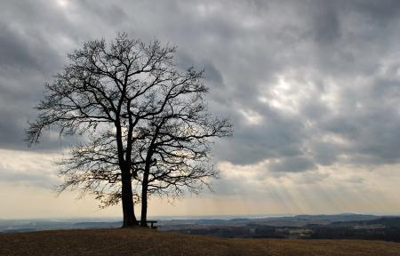 Обои дерево, поле, небо, облака