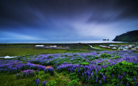Фотографии пейзаж, природа, цветы, небо