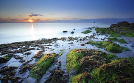Фото побережье, камни, водоросли, дымка