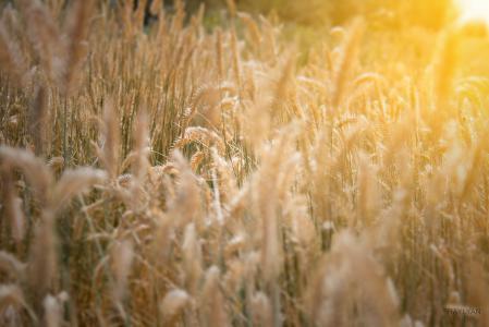 Фото hot summer, sun, солнце, лето
